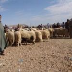 La Fiesta del Cordero, día grande para los musulmanes