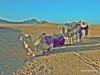 detalle-de-dromedarios-en-el-desierto-de-zagora
