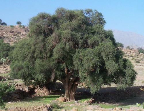 Taroudant, sus artesanos, el azafran y los arganes