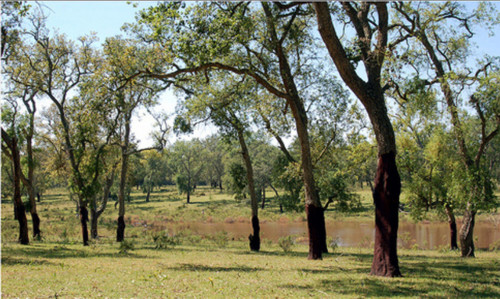El bosque de la Mamora, una pausa para la quietud