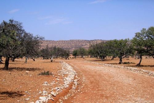 Camino hacia Argana