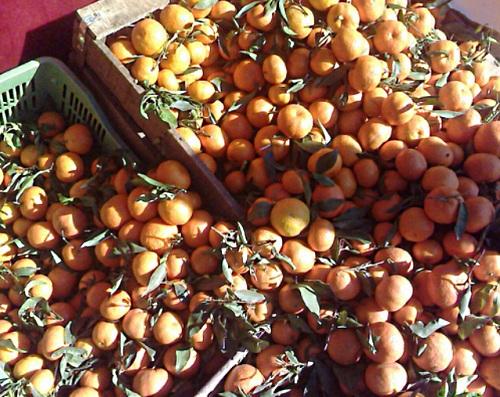 Naranjas de Berkan