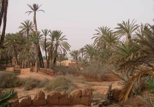 Oasis Aït Boukha