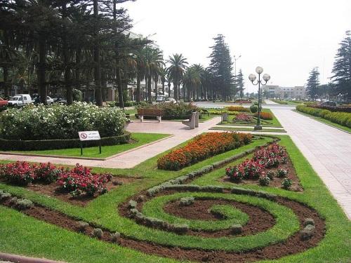Árboles y flores en las calles de Mohammédia