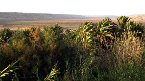 Lemseyed, oasis que parece un espejismo