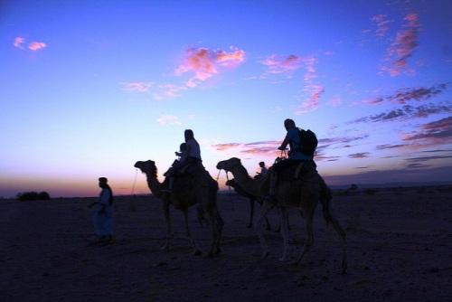 Camellos en M'Hamid