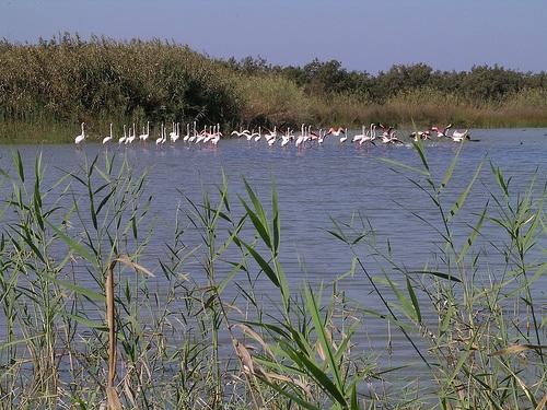 El santuario de aves de la Laguna Massa