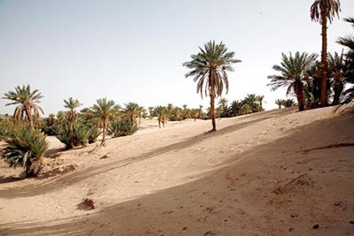 Oasis du sud Marocain