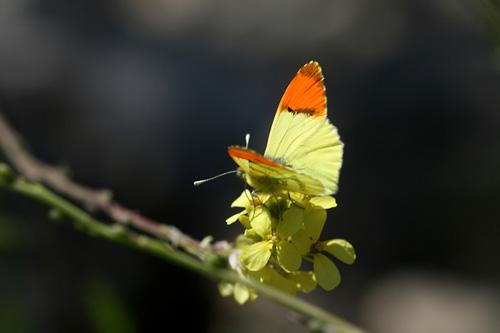 Mariposas en Marruecos